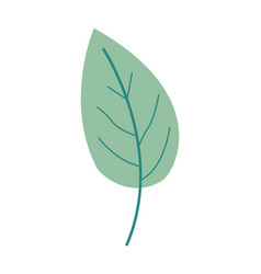 Green color of simple leaf plant vector