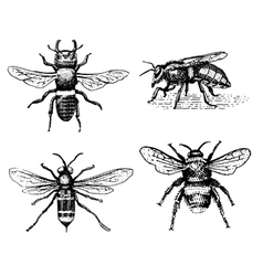 Set of bee engraved vintage hand drawn in vector