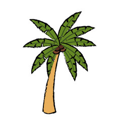 tropical palm tree coconut plant natural vector image