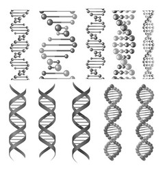 Symbols of dna helix or molecular chain vector