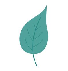 Green light color of big aovada leaf plant vector