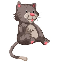 Cute cat with gray fur vector