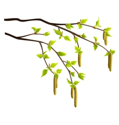 Spring birch tree branches isolated vector