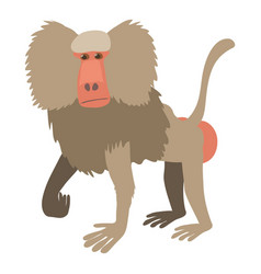 baboon icon cartoon style vector image