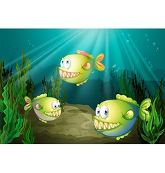 Three piranhas under the sea with seaweeds vector image