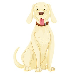 Pet dog with white fur vector