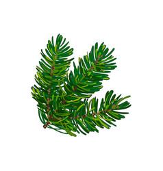 Hand drawn triple fir tree twig branch spruce vector