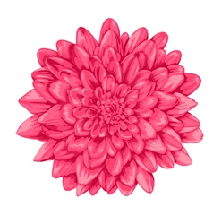 pink dahlia with the effect of a watercolor vector image