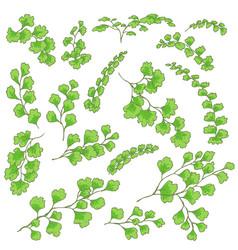 Green fern leaves sketch vector