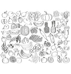 Vegetables fruits berries vector