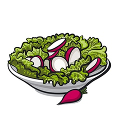 Radish salad vector
