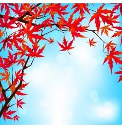 Red japanese maple leaves against blue sky eps 8 vector