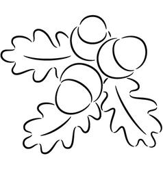 Acorn nuts vector image