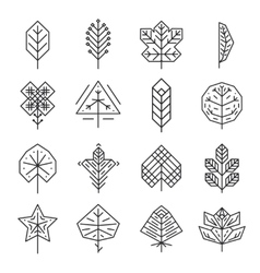 Hipster geometric thin line leaves for logos and vector image