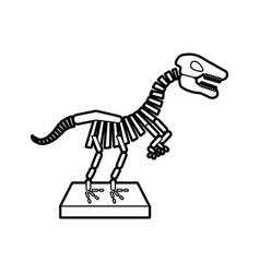 Museum dinosaur skeleton icon vector