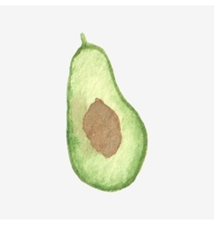 Watercolor or aquarelle half of avocado vector