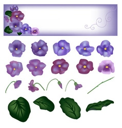 Flower violet set vector