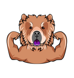 chow chow dog with muscules portrait of dog vector image vector image