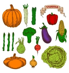 Autumnal harvest vegetables vintage sketch icons vector