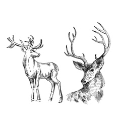 Hand drawn sketch of deer vector