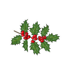 Mistletoe branch twig with leaves and berries vector