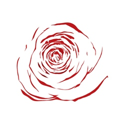 Abstract sketch red rose effect of a watercolor vector