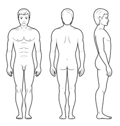 male figure vector image