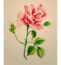 Rose watercolour vector