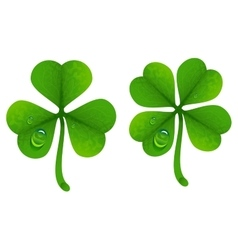 Clover leaves with drops of dew Lucky Clover leaf vector image vector image