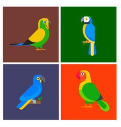 Parrots birds breed species animal flayer brochure vector