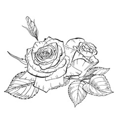 Two hand drawn rose flowers in contour b vector