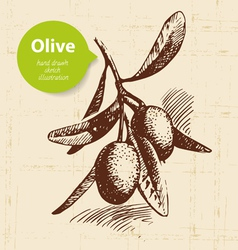 Vintage olive background Hand drawn vector image vector image