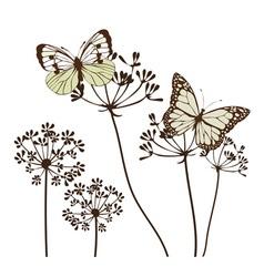 fennel flower butte vector image
