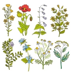Herbs and wild flowers vintage color vector