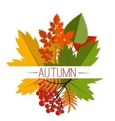 Autumn foliage banner autumn typographical vector