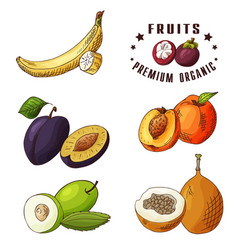 Hand drawn of banana plum peach vector