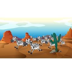 running zebras vector image