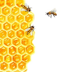 Watercolor honeycomd and bee vector
