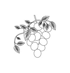 Black silhouette with bunch of grapes icon vector