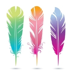 color bright decorative feathers of birds vector image vector image