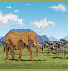 Color scene african landscape with elephants and vector