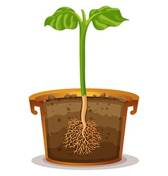 Planting tree in the clay pot vector