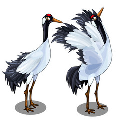 Two images of japanese crane bird isolated vector