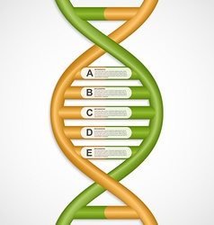 Infographics in the dna helix form design element vector