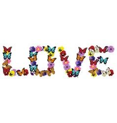 Love buttefly vector