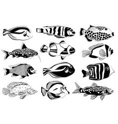set of aquarium fish black and white design vector image