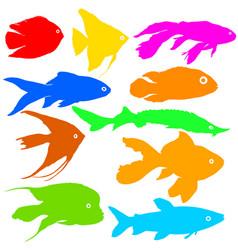 color silhouette of aquarium fish on white vector image