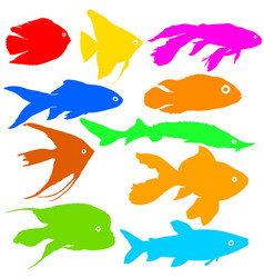 Color silhouette of aquarium fish on white vector