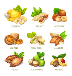 colourful sketch of different kinds of nuts vector image vector image
