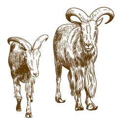 Engraving drawing of two mountain goats vector
